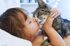 Кошки - секрет который мы еще не знали